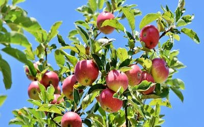 All You Need to Know about Fruit Trees
